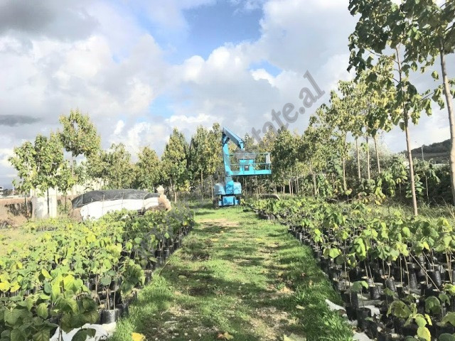 Land for sale in Maminas area in Durres.